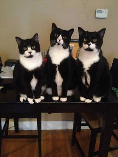 Tuxedo Boys...They look like that picture of Fun. I pinned to 'Music' a long time ago! :)