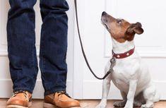 Kleine Hunde erziehen: Besonderheiten