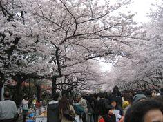 上野恩賜公園 2008.3