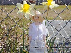 ニコ @ni_co_neko 4月8日      「凛と咲く」#momokoph