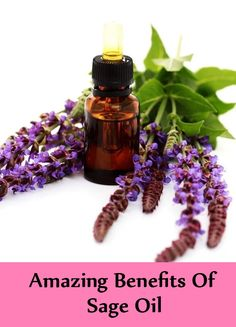 10 Amazing Benefits Of Sage Oil Sage Benefits, Sage Essential Oil, Health Care, Perfume Bottles, Herbs, Amazing, Beauty, Perfume Bottle, Herb