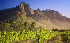 Picture: Vineyard in Franschhoek, South Africa?World Tourist Hot Spots , Worldwide Beautiful Scenery, High resolution Windows 7 Wallpapers of Famous Tourist Destinations in World, Scenery and landscapes of tourist attractions around the world South Africa Facts, South African Wine, Africa Travel, Wine Country, Cape Town, Monument Valley, Beautiful Places, Beautiful Days, Beautiful Scenery