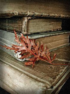 http://www.flickr.com/photos/1bluecanoe/5385854963/in/photostream/   #book #vintage #antique #leaves