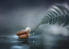 Lost. Photographer Chornyi Aleksandr