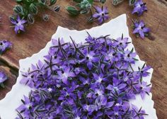La bourrache : Les fleurs #violettes comestibles du jardin
