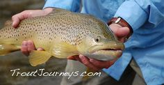 2012 Montana Fly Fishing  Yellowstone River,  Missouri  River, Big Horn River, Madison River, Riedy, TroutJourneys,  Rainbow Trout, Brown Trout, Craig Montana, Fly Fishing  TroutJourneys.com
