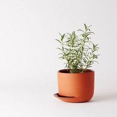 Herb pot by Anderssen & Voll. Made from hand thrown terracotta, the side opening promotes watering the soil from the bottom instead of from the top, which displaces soil and exposes sensitive root systems. Watering from the bottom promotes healthy root growth and, as a result, a bigger plant.