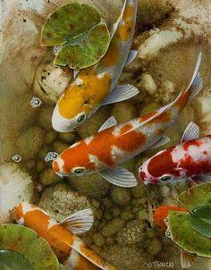 Terry Gilecki, artist, original koi fish paintings at White Rock Gallery Pretty Fish, Beautiful Fish, Koi Art, Fish Art, Fish Fish, Watercolor Fish, Watercolor Animals, Koi Kunst, Koi Painting