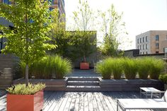 roof deck in a West Village coop, NYC by Robin Key Landscape Architecture, wood decking, grasses for privacy  texture, large colored planters
