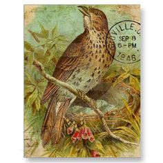 Vintage Thrush Postcards