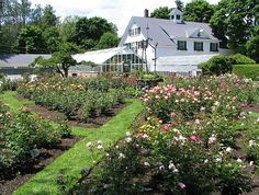 Fuller Gardens, North Hampton NH. One of the last working turn-of-the-century gardens