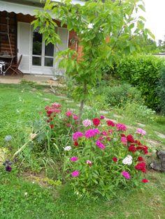 dal giardino