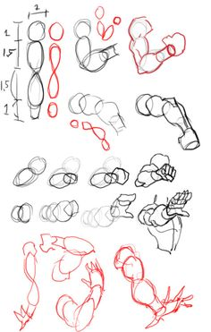arms ✤ || CHARACTER DESIGN REFERENCES | Find more at https://www.facebook.com/CharacterDesignReferences if you're looking for: #line #art #character #design #model #sheet #illustration #expressions #best #concept #animation #drawing #archive #library #reference #anatomy #traditional #draw #development #artist #pose #settei #gestures #how #to #tutorial #conceptart #modelsheet #cartoon