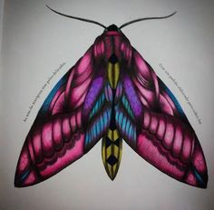 coloring ideas-moth