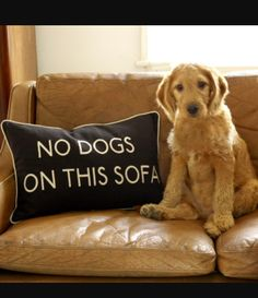 Tired of your dog taking up all your couch space or getting fur all over the couch? Well, it's an easy fix. Just don't allow your dog on the couch unless you say so. If they get on without permission make them go to their bed or cage. If you put them in their cage don't lock the door. You still want to allow them to do other things.