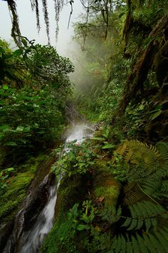 Cloud forest of Ecuador - null