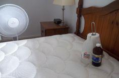 remove cat urine of a mattress