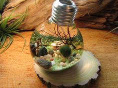 wickedclothes:  Reclaimed Lightbulb Terrarium  Inside of this reclaimed lightbulb lies sand, seashells, assorted pebbles, and marimo, otherwise known as Japanese moss balls. Marimo, a prized plant in Japan, is grown underwater and requires only low light and water to thrive. Rests on a driftwood base. Sold on Etsy.
