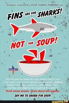 """This poster shows that drinking shark fin soup is so called """"poisonous"""". People should stop ordering shark fin soup in restaurants to prevent extinction of sharks. Shark Fin Soup, Shark Bait, Shark Shark, Colorful Fish, Tropical Fish, Save The Sharks, Shark Conservation, African Cichlids, Marine Biology"""
