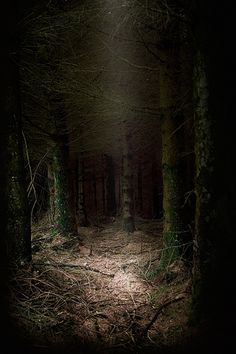 https://flic.kr/p/fifhF | The Dark Place | A very dense and incredibly dark conifer plantation near Thirlmere lake. The kind of place that makes you wish you'd bothered to take a tripod... I'll be back.