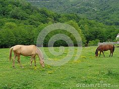 Horses grazing on green meadow among wildflowers