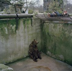 A bear sits alone in a pit in an utterly depressing Kaliningrad zoo. 2001, by Peter Marlow
