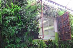 Como-crear-un-jardin-vertical-con-Woolly-Pocket-8.jpg (800×534)