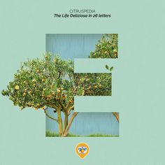 Did you know that most citrus tree are evergreens? Read more about these awesome fruits! Ads Creative, Creative Video, Creative Advertising, Advertising Design, Animation Stop Motion, Inspiration Artistique, Organic Art, Citrus Trees, Collage Design