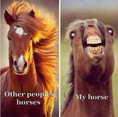 funny horse memes so true ; funny horse memes hilarious so true ; Funny Horse Memes, Funny Horse Pictures, Funny Horses, Cute Horses, Horse Love, Funny Memes, Memes Humor, Crazy Horse, Horse Humor