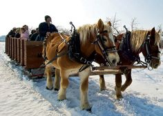 Door County Wineries Winter Winery Tour--Orchard Country Sleigh Ride with Mayberry's Carriages.