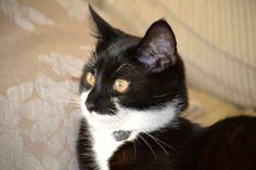 Lost on 16/04/2014 @ m45 7qy. Winston - missing from the Whitefield area, since early morning of the 16th April. Never strays far from home so we are really concerned. He's 10 months old and still only small, has a distinctive ... Visit: https://whiteboomerang.com/?show=1knkj32 (Posted by Kerry on 18/04/2014)