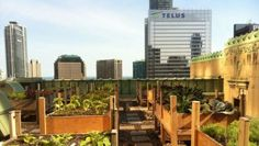The Fairmont Royal York a Toronto: l'hotel con l'orto e l'alveare sul tetto