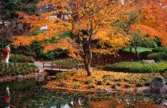 Vancouver/Canada -  Nitobe Garden, University of British Columbia