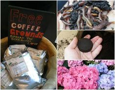 10 Genius Ways To Use Old Coffee Grounds In Your Garden Garden Soil, Garden Care, Hydroponic Gardening, Hydroponics, Gardening Tips, Container Gardening, Coffee Grounds For Plants, Acid Loving Plants, Garden Coffee