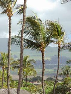 Maui Afternoon Rain