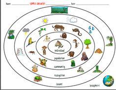 Worksheet Levels Of Organization Biology Worksheet worksheets google and organizations on pinterest ecosystem organization levels of the environment biotic vs abiotic ecology worksheet idea