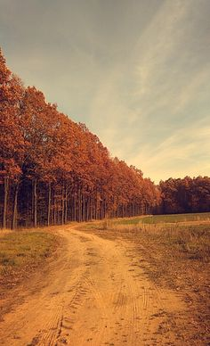 #fall #autumn #trees #forrest #path #sunny #day