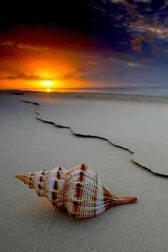 Beautiful View ☄ #Sunset With Sea Shell