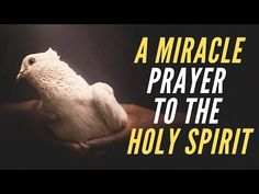 If You Want Jesus To Surprise You With a Miracle This New Month Then Say This Short But Powerful Prayer Now – Prayer Central Novena Prayers, Angel Prayers, Prayers For Healing, Catholic Prayers, Healing Prayer, Powerful Prayers, Short Prayers, Special Prayers, Jesus Prayer