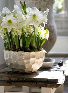 Queridos amigos, Quem disse que no inverno não há flores ? basta ver todos os bolbos que começam a aparecer para se perceber que no inver...