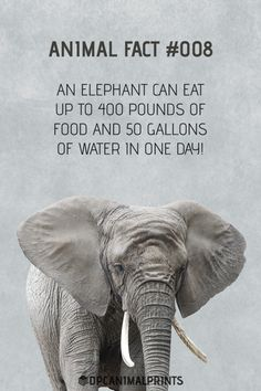 Pin by elephant parade on elephant quotes and facts Fun Facts About Elephants, Elephants For Kids, Fun Facts About Animals, Animal Facts, Animals For Kids, Animal Memes, Zoo Animals, Wild Animals, Elephant Parade