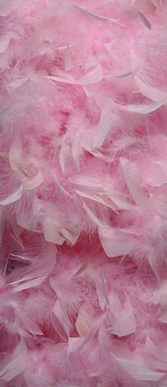 Soft Pink Feathers