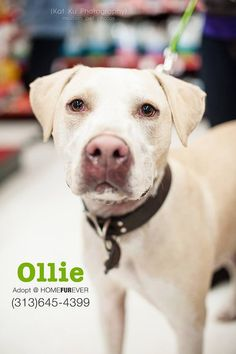 Handsome Ollie