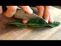 How to Chop and Use Kaffir Lime Leaves Lime Leaves Recipes, Indian Food Recipes, Beef Recipes, Laos Food, Fruit Shop, Kaffir Lime, Everyday Dishes, Homemade Cleaning Products, Chicken Skewers