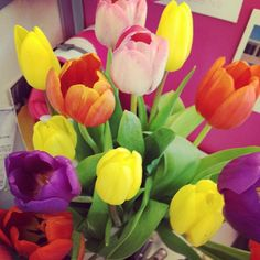 """Tulips on my desk are blooming, makes me excited for spring! #bbdesktweets #birchbox http://birch.ly/zWPFqf"