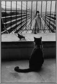 Henri Cartier Bresson http://www.facebook.com/fotografllarla.hayat