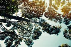 New Zealand Native Kunzea Ericoides (Kanuka) Bush royalty-free stock photo Up To The Sky, Native Plants, New Zealand, Nativity, Flora, Royalty Free Stock Photos, Clouds, Nature, Photography