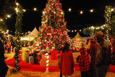 festival-of-christmas-images-christmas-festival-pdZwQYjpg