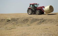 Farmer and rancher Kenneth Hees brings a bale of hay to his cattle near a dry stock tank on a pasture devoid of ground vegetation near Manoron, Texas. The hay is actually stalks from his failed corn crop.