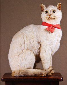 Walter Potter Victorian taxidermy cat.